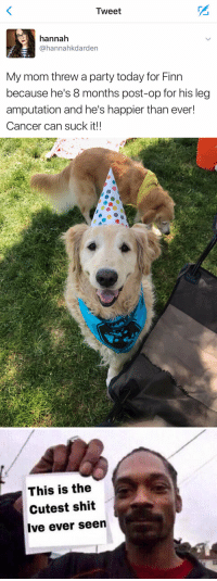 Finn, Funny, and Party: Tweet  hannah  @hannahkdarden  My mom threw a party today for Finn  because he's 8 months post-op for his leg  amputation and he's happier than ever!  Cancer can suck it!!   4%   This is the  Cutest shit  Ive ever seen https://t.co/QhJAqPZqwa