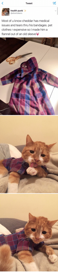 Clothes, Funny, and Heart: Tweet  health punk  eliwhiskers  Most of u know cheddar has medical  issues and tears thru his bandages. pet  clothes r expensive so l made him a  flannel out of an old sleeve   r?/ My heart can not handle this 😭😍 https://t.co/KTHaKbpKqm