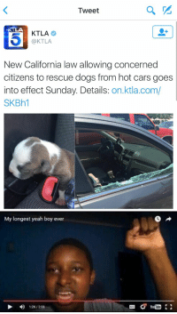 Cars, Funny, and California: Tweet  KTLA  @KTLA  New California law allowing concerned  citizens to rescue dogs from hot cars goes  into effect Sunday. Details  on.ktla.com/  SKBh1   My longest yeah boy ever  D 126/208 https://t.co/bVT0Mk0xHA