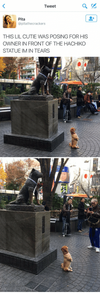 Tweet, Hachiko, and Pita: Tweet  Pita  @pitathecrackers  THIS LIL CUTIE WAS POSING FOR HIS  OWNER IN FRONT OF THE HACHIKO  STATUE IM IN TEARS