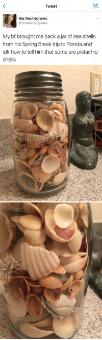 Cute, Funny, and Spring Break: Tweet  Ria Rechtorovic  3cheers20years  My bf brought me back a jar of sea shells  from his Spring Break trip to Florida and  idk how to tell him that some are pistachio  shells   ソ THIS IS SO CUTE AND FUNNY AT THE SAME TIME 😂😂 https://t.co/O7zVmUWf0A