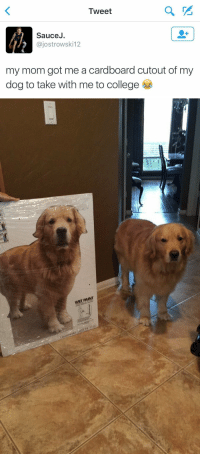 "Animals, College, and Target: Tweet  SauceJ.  @jostrowski12  my mom got me a cardboard cutout of my  dog to take with me to college   WET PAINT <p><a href=""http://babyanimalgifs.tumblr.com/"" target=""_blank"">more baby <b>animals <i>here</i></b></a></p>"