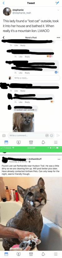 "OHMYGOD https://t.co/GXj8pjZzHB: Tweet  stephanie  @stephanie_reah  This lady found a ""lost cat"" outside, took  it Into her house and bathed it. When  really it's a mountain lion. LMAOO   Nora's Post  7h Like Reply  7h Like Reply  2  7h Like Reply  Write a reply...  7h Like Reply  7h Like Reply  It looked sad outside :(  。  ( Write a comment.  GIF)  (じ   T-Mobile  6:24 AM  Anthem Stuff  Yesterday at 9:18 PM .  Found Lost cat Panhandle near Hudson Trail. He was a little  dirty so we are cleaning him up. Will post better pics later.  Have already contacted Anthem Pets. Can only keep for the  night, seems friendly though.  rt OHMYGOD https://t.co/GXj8pjZzHB"