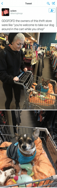 """Funny, Thrift Store, and Nan: Tweet  svlem  @baring fangs  GDGFDFD the owners of this thrift store  were like """"you're welcome to take our dog  around in the cart while you shop""""   EI   NO NaN the world needs more stores like this 😭😍"""