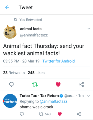 Android, Facts, and Obama: Tweet  t You Retweeted  animal facts  @animalfactszz  Animal fact Thursday: send your  wackiest animal facts!  03:35 PM 28 Mar 19 Twitter for Android  23 Retweets 248 Likes  Turbo Tax - Tax Return@us... 1m v  InTUIT  turbot  ot Replying to @animalfactszz  obama was a crook  t 543 turbo tax tax return