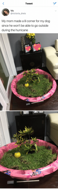 Funny, Hurricane, and Mom: Tweet  Vic  @victoria_dreis  My mom made a lil corner for my dog  since he won't be able to go outside  during the hurricane Me as a dog owner https://t.co/UBgPDrk9XT