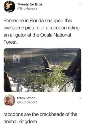 Dank, Alligator, and Animal: Tweets for Bros  @BroHumors  Someone in Florida snapped this  awesome picture of a raccoon riding  an alligator at the Ocala National  Forest.  DANK  MEMEOLOGY  frank lotion  @GucciClout  raccoons are the crackheads of the  animal kingdom Raccoons are tiny anarchists