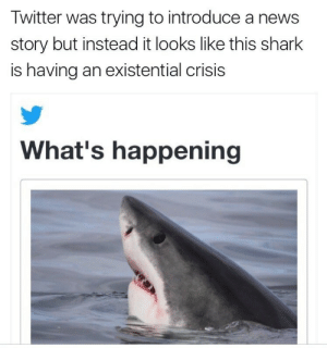 existential crisis: Twitter was trying to introduce a news  story but instead it looks like this shark  is having an existential crisis  What's happening