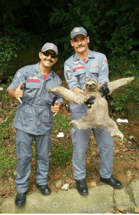 Two Brazilian fireman rescued a pretty fabulous sloth..: Two Brazilian fireman rescued a pretty fabulous sloth..