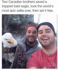 Memes, Trap, and Trapping: Two Canadian brothers saved a  trapped bald eagle, took the world's  most epic selfie ever, then set it free. Canada, you have our thanks and respect