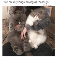 """Benadryl, Bless Up, and Food: Two chunky bugs having all the hugs  DrSmashlove I go to a girl crib and I see two gigantic Extra Value Meal Big Mac Super Size fries lookin-ass kitty cats like this Bruh and I know it's finna be a long, painful, sneezy, allergic ass night. Kitty cats like this Bruh they ain't the pets. The woman living there - she the pet. THE CATS own that crib. The human just pay the rent and hook up the cat food and the cat nip. Meanwhile these big ass felines just destroying everything in sight, sitting on everything in sight, and leaving copious amounts of dander wherever their heart desire Bruh. Note to the men. Don't take a Benadryl when u go to a girl crib and she got cats like this. Empty two capsules on her bathroom counter and snort them bitches like they pure white coca - u feel me? U Tony Montana right now and all u tryina do is survive long enuf to introduce her to yo litto fren. So with that said shout to u savage ladies with the big hairy ominous hangry lookin ass kitty cats. They gon make me struggle to breathe. But they ain't gon stop my determination to slay the Punani. Imma befriend them big ass animals. Imma pet them. Imma love them. """"Listen u obese creatures, smash loves all of God's creatures. Sit on my lap. Cover my Canali trousers in cat dander, don't worry about it, the Asian dry cleaner lady know all my secrets 😍. Express great suspicion at first as u size me up as to whether I'm a cat person or just a pretender and within four minutes, purr and make googly eyes at me as I rub your soft underbelly while your mama gazes lovingly at me. And all the while, imma hold them tears in. Just like a sad movie imma keep swallowing hard and keep it G and not pretend like I'm suffocating in real time. And when I get to that bed imma give yo mama that absolute A1 sleepy cat dander Benadryl Dih. U feel me? Imma lay so much pipe that the Union Plumbers gon try to hire me. Ya get me! Bless up, kitty cats. Y'all my new friends now. Let's go lo"""