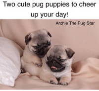 Two cute pug puppies to cheer  up your day!  Archie The Pug Star They certainly cheered up my day. Lots of pug hugs friends....😘😘😘🐾🐾🐾