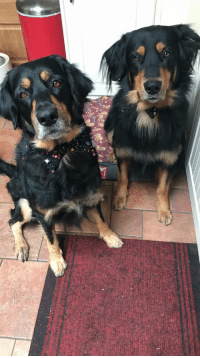 Guess, How To, and How: two doggos that know how to protect