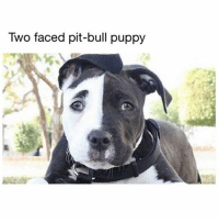 Heads up: this is how pit bull ears should look. Big and floppy and beautiful. They don't need to be cut for God sake, God made them perfect already. Just like Punani lips 'supposably' they suppose to be small but guess what BIG AND FLOPPY IS BEAUTIFUL TOO 🐘 NoEarsLeftBehind NoPunanisLeftBehind FloppyIsBeautiful 🤤😂😂😂: Two faced pit-bull puppy Heads up: this is how pit bull ears should look. Big and floppy and beautiful. They don't need to be cut for God sake, God made them perfect already. Just like Punani lips 'supposably' they suppose to be small but guess what BIG AND FLOPPY IS BEAUTIFUL TOO 🐘 NoEarsLeftBehind NoPunanisLeftBehind FloppyIsBeautiful 🤤😂😂😂