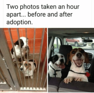 Taken, Photos, and Them: Two photos taken an hour  apart... before and after  adoption Just couldn't bring myself to separate them.