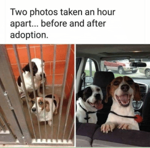 Precious, Taken, and Smiles: Two photos taken an hour  apart... before and after  adoption Their smiles are so precious!