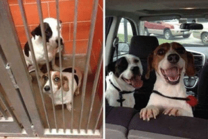 Taken, Photos, and  Two: Two photos taken an hour apart, before and after adoption.