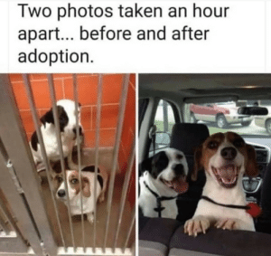My.. heart-: Two photos taken an hour  apart... before and after  adoption My.. heart-