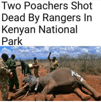 Memes, Elephant, and Rangers: Two Poachers Shot  Dead By Rangers In  Kenyan National  Park Four armed intruders on a poaching mission, were discovered in Kenya's Tsavo East National Park on Tuesday. Two were killed by rangers during a fire exchange, while the other two have escaped the search is on by authorities to try and find them. elephants antipoaching wildlife wildlifecrime