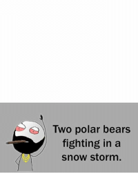 Twitter: BLB247 Snapchat : BELIKEBRO.COM belikebro sarcasm meme Follow @be.like.bro: Two polar bears  fighting in a  snow storm, Twitter: BLB247 Snapchat : BELIKEBRO.COM belikebro sarcasm meme Follow @be.like.bro