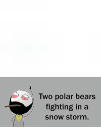 Twitter: BLB247 Snapchat : BELIKEBRO.COM belikebro sarcasm meme Follow @be.like.bro: Two polar bears  fighting in a  snow storm. Twitter: BLB247 Snapchat : BELIKEBRO.COM belikebro sarcasm meme Follow @be.like.bro