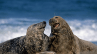 Two seal bros having a laugh: Two seal bros having a laugh