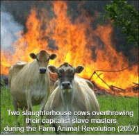 Slaughterhouse: Two slaughterhouse cows overthrowing  their capitalist slave masters  during the Farm Animal Revolution (2057)  ingilp.com