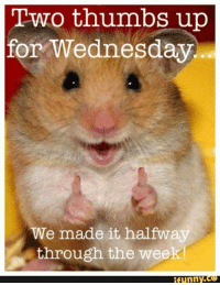 Two thumbs up for Wednesday - We made it halfway through the week             #hamster Good Morning All, have a wonderful day: Two thumbs up  for Wednesday  We made it halfway  through the week  funny.ce Two thumbs up for Wednesday - We made it halfway through the week             #hamster Good Morning All, have a wonderful day