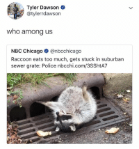 Chicago, Lol, and Police: Tyler Dawson  @tylerrdawson  who among us  NBC Chicago @nbcchicago  Raccoon eats too much, gets stuck in suburban  sewer grate: Police nbcchi.com/3SShtA7 this would be me LOL