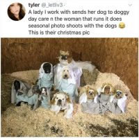 Christmas, Dogs, and Memes: tyler @_letliv3  A lady I work with sends her dog to doggy  day care n the woman that runs it does  seasonal photo shoots with the dogs  This is their christmas pic I sort of like them all. Tw _letliv3