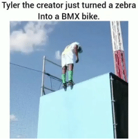 Memes, Tyler the Creator, and Bmx: Tyler the creator just turned a zebra  Into a BMX bike. tylerthecreator turned a Zebra into a BMX Bike 🚴 Vía @the.incredible.holt