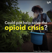 Memes, Help, and 🤖: Tylt  Could pot help solve the  opioid crisis  Footage: Getty / David Fortney