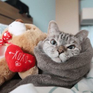 Type @ and the first person that pops up gets me as their valentine's gift 🎁 Love, Nala: Type @ and the first person that pops up gets me as their valentine's gift 🎁 Love, Nala