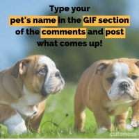 Gif, Memes, and Pets: Type your  pet's name in the GIF section  of the commentsand post  what comes up!  cuteness