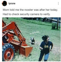 Lmao @tyrone account account was ranked number 1 on Instagram @tyrone: tyrone  Mom told me the rooster was after her today.  Had to check security camera to verify  Tyrone  lg: Lmao @tyrone account account was ranked number 1 on Instagram @tyrone