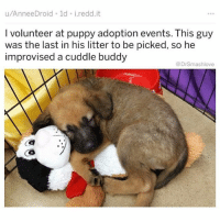 Memes, Puppy, and Adorable: u/AnneeDroid 1d i.redd.it  I volunteer at puppy adoption events. This guy  was the last in his litter to be picked, so he  improvised a cuddle buddy  @DrSmashlove (@dogsbeingbasic) posts truly adorable doggo and pupper memes.