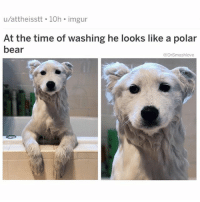 "Ass, Google, and Memes: u/attheisstt 10h imgur  of washing he looks like a polar  At the time  bear  @DrSmashlove YOU KNOW IT'S WINTER WHEN YO CRIB IS SO COLD THAT U GOTTA HAVE CONVERSATIONS WITH YOURSELF JUST TO FINALLY CONVINCE...*YOURSELF*...TO GET OUT OF THE SHOWER. LIKE GROWN SMASH IS LIKE ""enough, shower time is over. Let's work."" Baby smash: ""JUST TWO MORE MINUTES!"" Grown smash: ""you said that two minutes ago."" Baby smash: ""STOP IT THAT WASN'T TWO MINUTES! YOU WERE COUNTING FAST! WHY DO U ALWAYS COUNT FAST WHEN IT'S *MY* TURN FOR THE SHOWER??!"" Grown smash: ""fine one more minute."" Baby smash: ""Ok but stop counting out loud if you count out loud it ruins it just let me enjoy my minute!!"" Grown smash: ""Ok minute's up, China wakes up in six hours, you got deadlines to—"" Baby smash: ""YOU'RE NOT THE BOSS OF ME!! YOU'RE NOT THE BOSS OF ME!!! MAMA!! MAMAAAAAAAA!!!!!!"" *cries into bath towel* *finally emerges shivering and shaking like a newborn baby* *Googles 'how do I get a job renting jet skis on a beach in a warm location as a career'* *hears beeping noises from two directions* *sees one dump truck backing up and dumping a truckload of chancletas on me* *sees other dump truck dump a truckload of wooden spoons on me* *two identical versions of my mama emerge from both trucks wearing bifocals, creased dress pants from 1991 and Reeboks from the TJ MAXX red tag section from 1997 to tell me to get back to work* *closes Google browser and takes my ass to work* 😂😂😂"