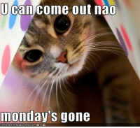 U can come out nao  monday's gone Yep Monday is gone and now its Tuesday Happy Tuesday everyone