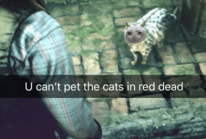 Cats, Smh, and Red Dead: U can't pet the cats in red dead Smh Rockstar