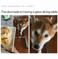 "Af, Ass, and Chilis: u/chili_and_sesame 7d i.redd.it  The downside to having a glass dining table  irt ""How are those eggs, human? Delicious eh? Oh very delicious, eh? Heh. Nice. U not gon share them tho, are u. U just gon enjoy that delicious ass meal while I dwell in this under-dining-table purgatory watching that egg yolk dribble down the side of yo mouth and then u gon feed me some overprice organic doggie food that ain't een 1-10th as delicious. K. I see u. Well see the problem is, I be acting like a dog too much. Greet u enthusiastically at the door. Wag my tail. Boop snoots, all that floofy shit that u humans like. But see I could be a cat, too. I could be hella uninterested in u. Ignore TF out of u just like the cat. Just icey cold den a MF. That's what u what? It MUST be what chu want, witchoe non-sharing ass. Go head then. GO HEAD. From now on, meow, BIH. MEOW. AF."" 😂😂😂"