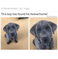 (@x__social_butterfly__x) is truly one of my favorite animal meme pages.: u/DavidLuizshair 2d imgur  This boy has found his foreverhome!  @DrSmashlove (@x__social_butterfly__x) is truly one of my favorite animal meme pages.