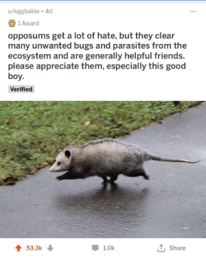 wholesome good boi: u/eggbabie 4d  1 Award  opposums get a lot of hate, but they clear  many unwanted bugs and parasites from the  ecosystem and are generally helpful friends.  please appreciate them, especially this good  boy.  Verified  53.3k  1.0k  Share wholesome good boi