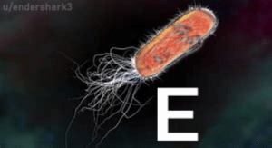 Could You Not Get E Coli FOR FIVE MINUTES??   E Coli Meme on ME ME