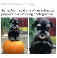 Bless Up, Chance the Rapper, and Life: u/Fio_Fiddlesworth ld imgur  So my Mom sold one of her schnauzer  puppies to an aspiring photographer  DrSmashlove So u know how I said a few weeks ago that I tried all the healthy ice creams and I was done with them, and I was going back to real ice cream? About that. See there comes a time in yo life when u realize: u just ain't about that life. It come at different times for different people. Some of u pretty ladies go to music festivals. And y'all got that friend Mandy. Mandy got a lil marketing gig in the city where she make a good wage. Went to a good school. Seem normal. But she different. U knew it when u hit Lollapalooza with her and watched her pop a Molly, pop three pills where she ain't even know what pills they are, some cool white kid in a Larry Bird jersey just handed them to y'all so she took them, smoked a blunt, then snorted coke with that same kid in a port a potty. U seen her 15 min later vibing to Chance the Rapper while a lil bit of puke dribbled out the corner of her mouth while she looked around crazily and on that day, u had a realization: u ain't bout that life. Mandy? Bout that life. U? Not about that life 😂. That's me with ice cream. I went to Mariano super market. Grabbed some Ben and Jerry Cookie Dough. Seen it had 60 grams fat - 1,120 calories-pint. Gently caressed my 6 pack over my t shirt. And reflected on the fact that I'm just not bout that life. So I copped some skinny cow ice cream sandwiches. Each one got 160 calories. I eat two to get satisfied and that's plenty. I gotta eat seven them b!tches to equal one pint of Ben and Jerry. I used to be bigger. Had a 36 waist. Ate whatever I wanted. I can't go back to that place. I'm a new smash. U feel me? I'm in a different place. I'll eat B + J once in a blue moon bc it (and Jeni's) are still the GOATs but for daily use, imma stick to these skinny cows. P.s. Skinny cow please make them rectangular with a paper (not plastic) cover. On the rare occasion my mama bought us a box of generic ice cream sandwiches, peeling the paper off as it sticks to the ice cream on the side and then liiiiiicking it up the side was the best part. The adult equivalent is peeling the panties off a woman, seeing them stick to the Nani, and liiiiiiiicking...well, y'all get the point 🤗. Bless up! 😂😂😂