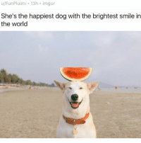 Animals, Cute, and Cute Animals: u/FunPlustv 13h imgur  She's the happiest dog with the brightest smile in  the world SWIPE & TAG ❤️ 🍉 follow me @v.cute.animals 👈