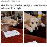 Love, Memes, and Wow: u/Jdubbs214 16h imgur  Met Fiona at the bar tonight- I now believe  in love at first sight wow same 😍😍😍 (@drsmashlove)