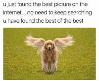 Internet, Memes, and Best: u just found the best picture on the  internet.. no need to keep searching  u have found the best of the best Well it's been real guys. We're shutting down the internet. Nothing more to see. Via @theworldpolice
