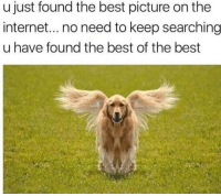 Internet, Life, and Angel: u just found the best picture on the  internet... no need to keep searching  u have found the best of the best <p>this is an angel pupper reblog to save a shelter puppers life</p>