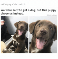 Af, Bless Up, and Foh: u/Kalaylay ld i.redd.it  We were sent to get a dog, but this puppy  chose us instead.  @DrSmashlove Instagram y'all gotta stop messing up my timeline bruv. First y'all wanna give me people's posts from three days ago that meme expired by now. That's like sour milk bruv three days in meme years that's a oldie now. Elvis Presley status lmao. Don't be cruel, to a heart that's true lookin a$$es. FOH lol. Second of y'all now u putting people I don't een follow in my timeline. That's like somebody showing up to my crib for a lil get together and just sitting they a$$ on my couch smoking the hooka with everyone else - BIH. I don't share the hooka hose with strangers. I don't just swap spit with randoms that's how y'all catch jurpees that's medical. Hell nah. IG u giving my timeline jurpees this a travesty. Comedy pages that ain't em funny. IG models I don't een like like no offense I'm body positive af but the heart inclines toward whom it liketh and I don't liketh these birds lmao. I follow a very specific subset of people, don't be sh!tting up my timeline like this. Terrible. YALL TERRIBLE. FIX IT, ZUCKS - ZIP THAT HOODIE UP, U GOT WORK TO DO bless up 😂😂😂