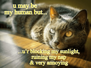 sunlight: u may be  my human but..  .u'r blocking my sunlight,  ruining my nap  &very annoying